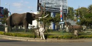 arusha-tanzania-jacek-paciorek-slonie